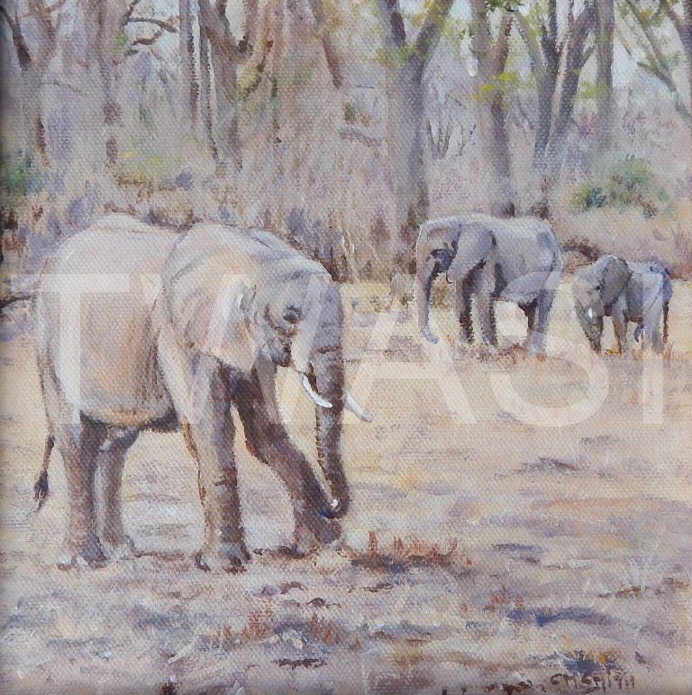'Early evening in Luangwa' by Christine Smith Acrylic 28 x 28 cms £150