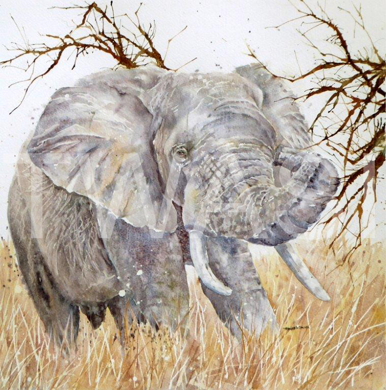 'Elephant Bull at Entabeni' by Linda Travers Smith Watercolour 36x36 cms £145