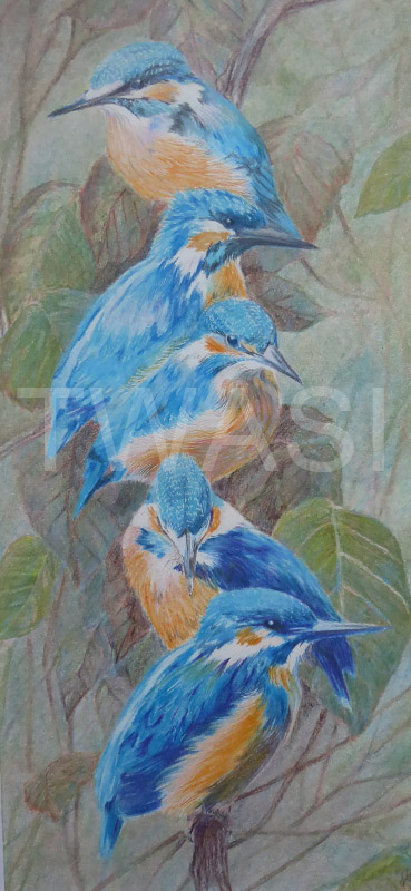 'Family Outing ll' by Jackie Cox Coloured pencils 41.5 x 26 cms £145