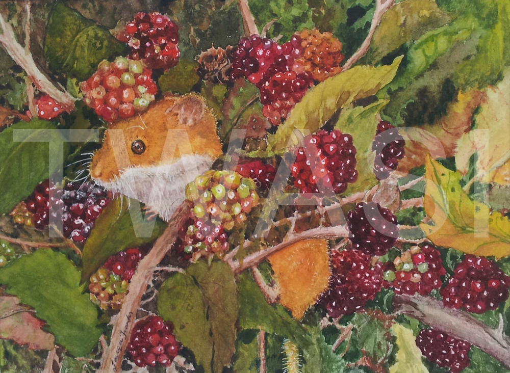 'Harvest Feast' by Jacqui Franks Watercolour Framed 37 x 32 £295