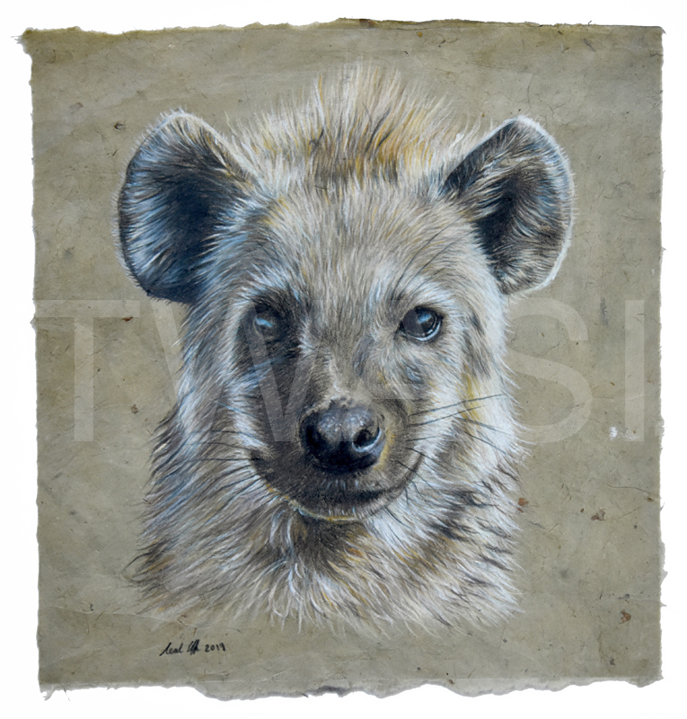 'Hyena' by Neal Griffin Coloured Pencil 31x31 cms £120