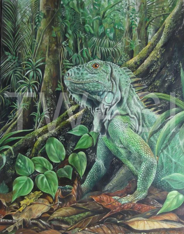 'Iguana' by Caroline Bletsis Oil Unframed 35 x 45 cm £300