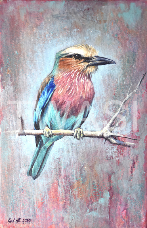 'Lilac Breasted Roller' by Neal Griffin Oil 27x37 cms £230