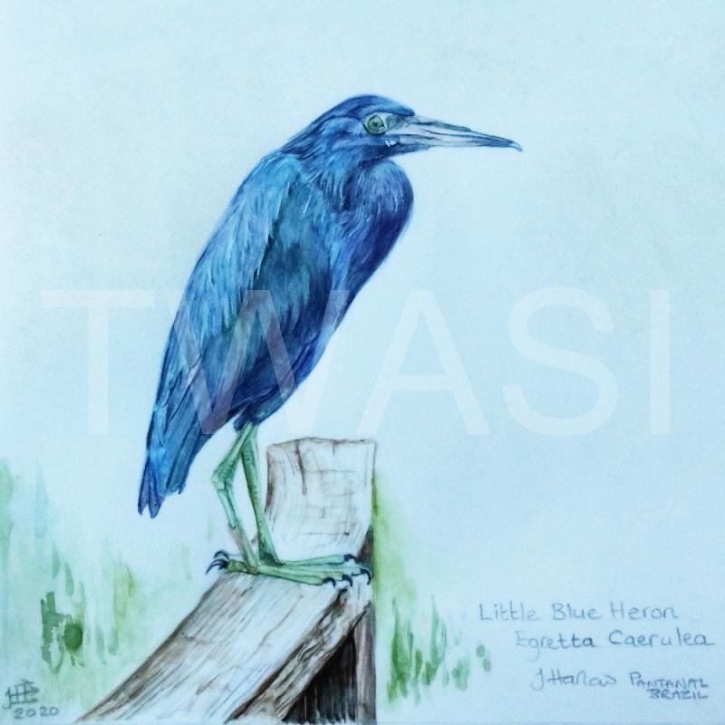 'Little Blue Heron' by Jean Harlow Watercolour on Brazilian vellum 28 x28 cms £495