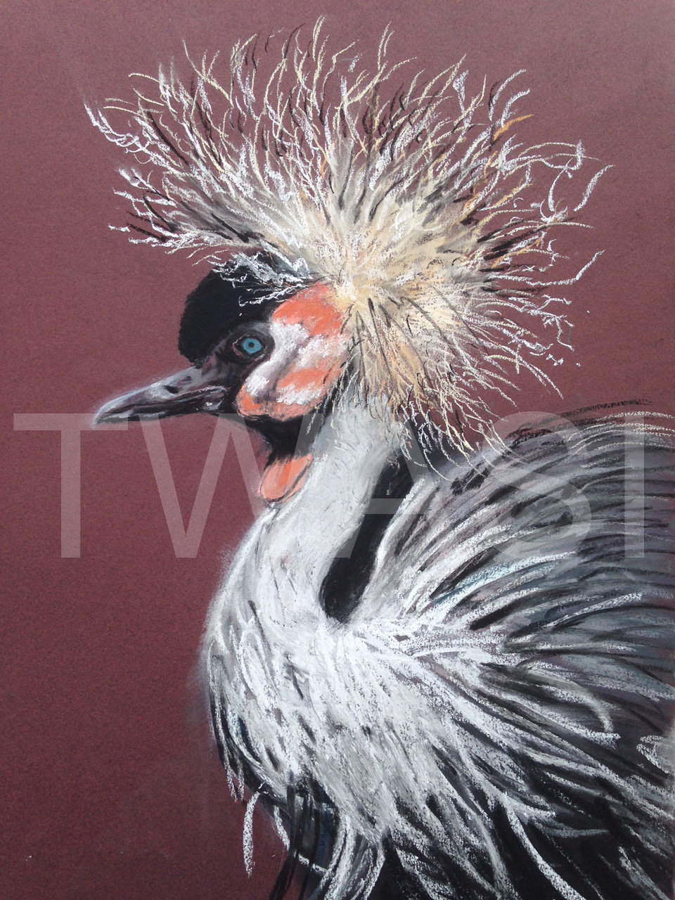'Mad Hair Day' by Diane Haines Pastel Framed 46 x 60 cms £175