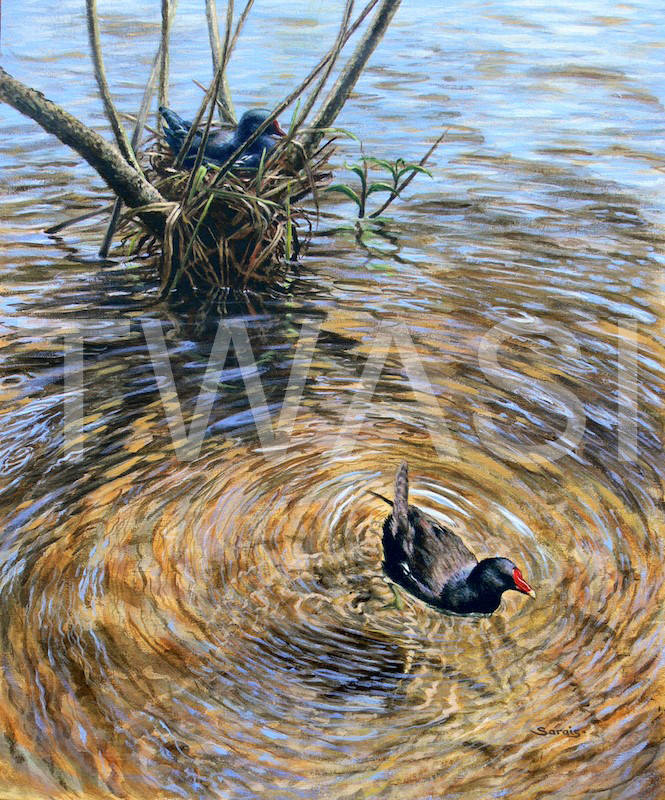 'Midstream' by Sarais Crawshaw Acrylic Unframed 51 x 61 cms £400