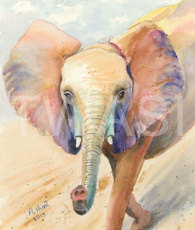 'Mkaliva says hello' by Ann Hunt Watercolour 45 x 35.5 cms £235