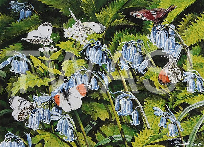 'Orange Tips & Peacock' by Martin Horsfield Gouache Framed 336 x 28.7 cms £125