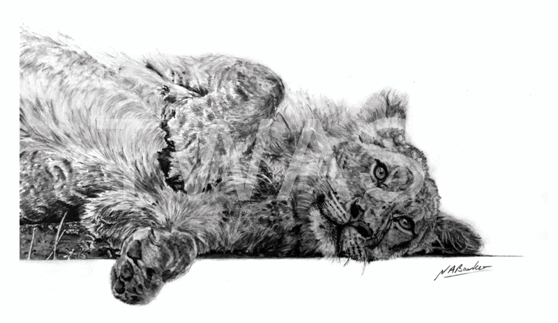 'Paws for thought' by Nick Barker Pencil Framed 42 x 51 cms £200