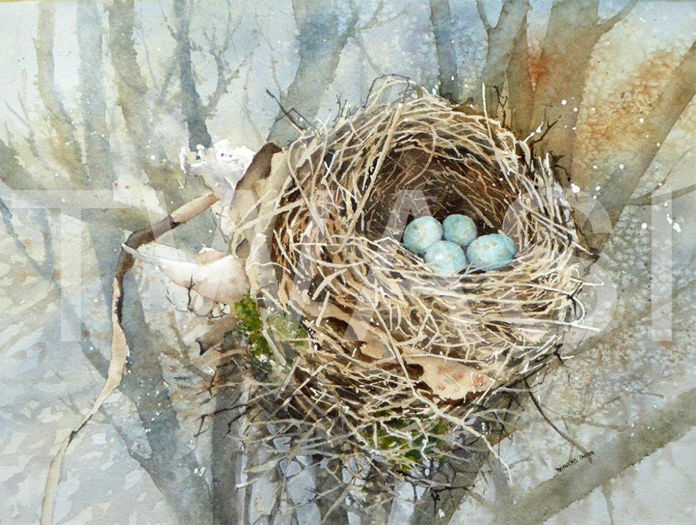 'Polack Birds Nest' by Linda Travers Smith Watercolour 28x35 cms £150
