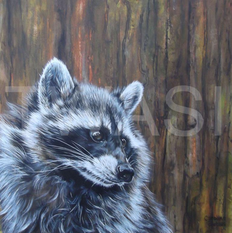 'Raccoon' by Caroline Bletsis Acrylic Unframed 30 x 30 cm £250