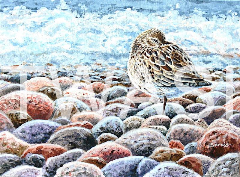 'Safe haven' by Sarais Crawshaw Acrylic Unframed 40 x 30 cms £250