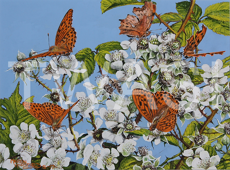 'Silver-washed Fritillaries & Comma' by Martin Horsfield Gouache Framed 33.6 x 28.7 cms £125
