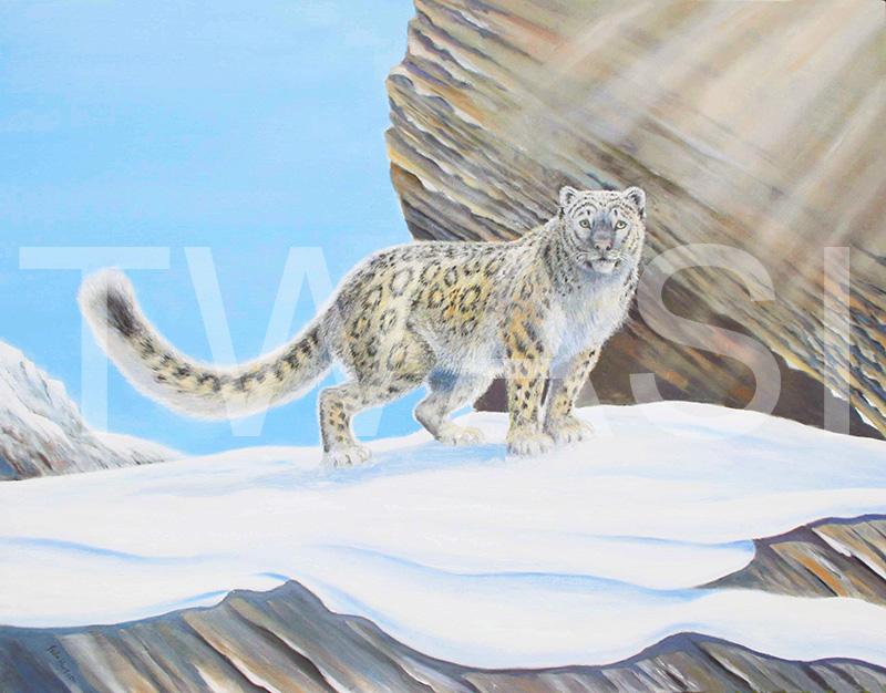 'Snow Leopard' by John Horton Oil on canvas Unframed 92 x 72 cms £795