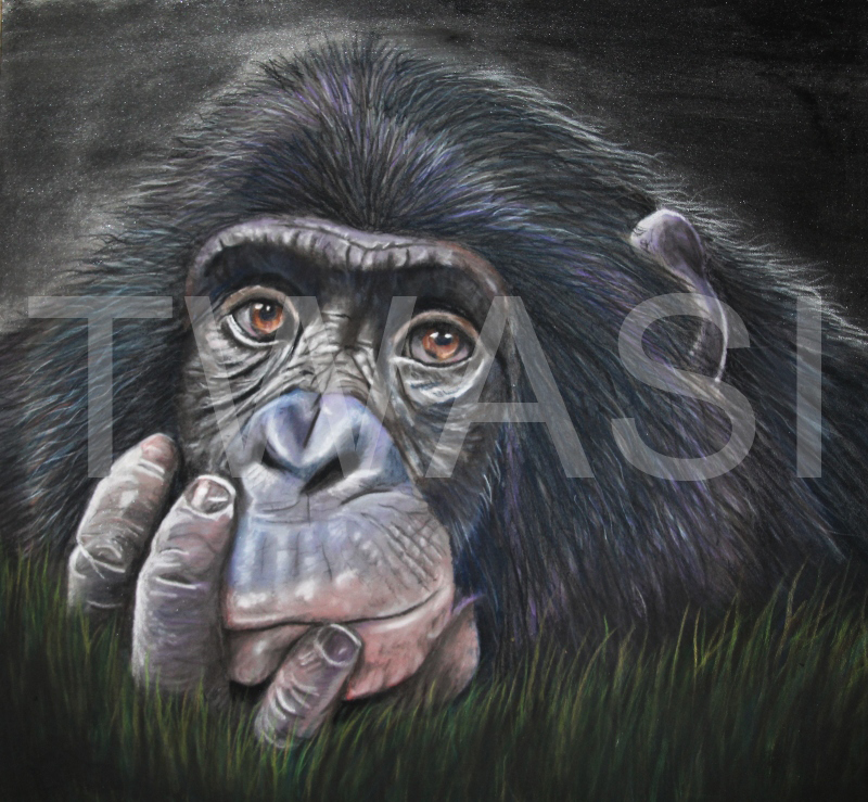 'Still Thinking' by Frances Daunt Pastels Framed 44 x 41 cms £350