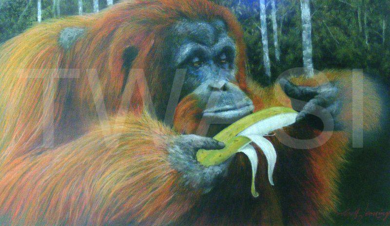 Uummm.... by Geoff Jennings Banana Pastel pencil Framed 59 x 84 cm £550