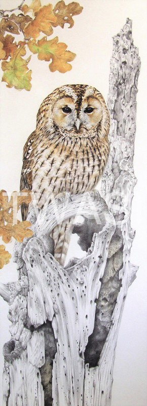 'Autumn Tawny Owl' by Valerie Briggs Graphite and coloured pencils 74 x 25 cms £750