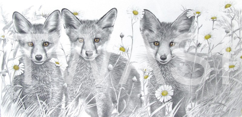 'The Little Foxes' by Valerie Briggs Graphite and coloured pencils 27 x 55 cms £750