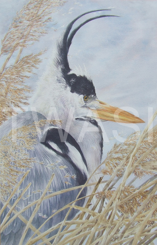 'Wind in the Reeds' by Valerie Briggs Watercolour Unframed 53 x 34 cms £475