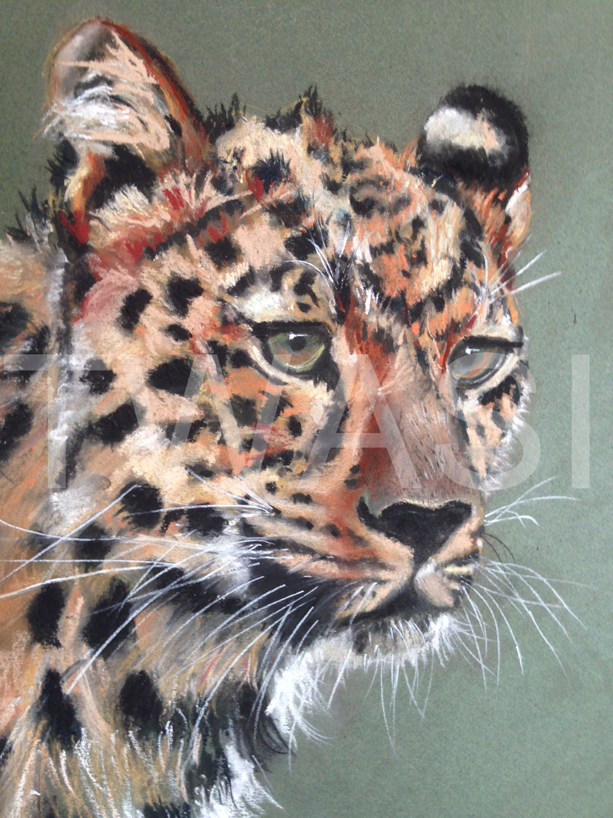 'Watching' by Diane Haines Pastel Framed 47 x 40 cms £225