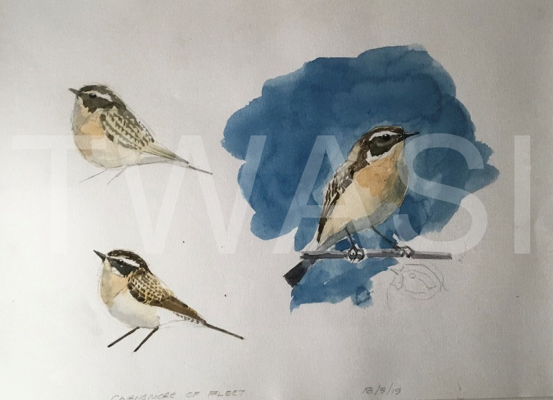 'Whinchat Cairnsmore' by Martin Gibbons Watercolour and Graphite 54 x 44 cms £250