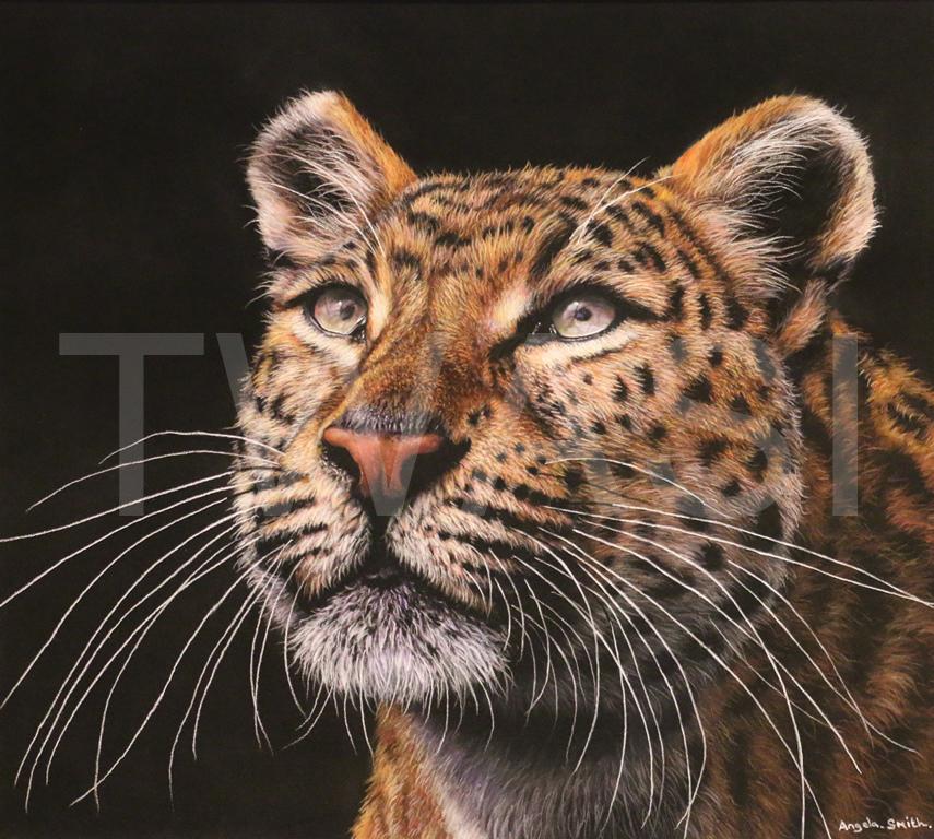 'Curiosity Cat' by Angela May Smith Pastel 50 x 50 cms £425