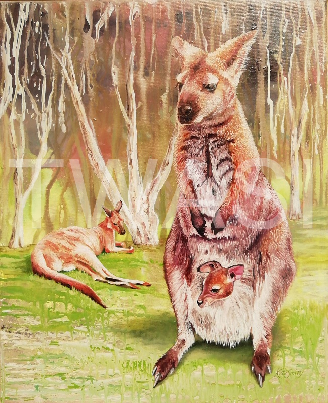 'Red Kangaroos' by Kate Smith Oil on Acrylic Framed 71 x 56cms £260