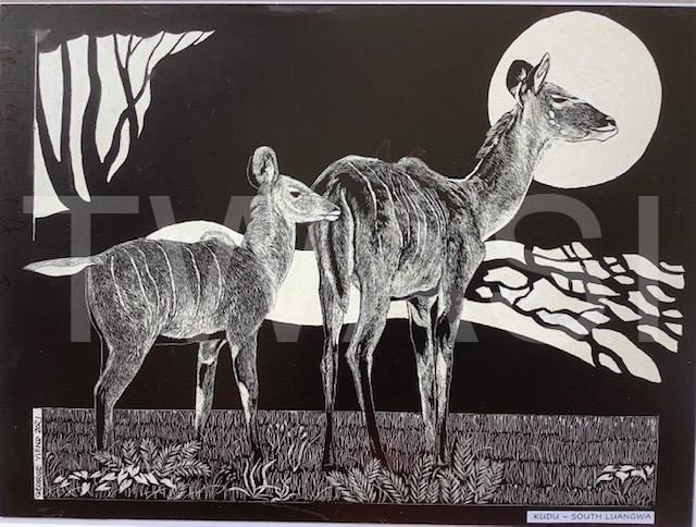 'South Luangwa Kudu' by George Yiend Scraperboard 30 x 22 cms £130