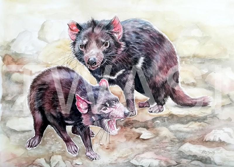 'Tasmanian Devils' by Kate Smith Watercolour Framed 57 x 66cms £210