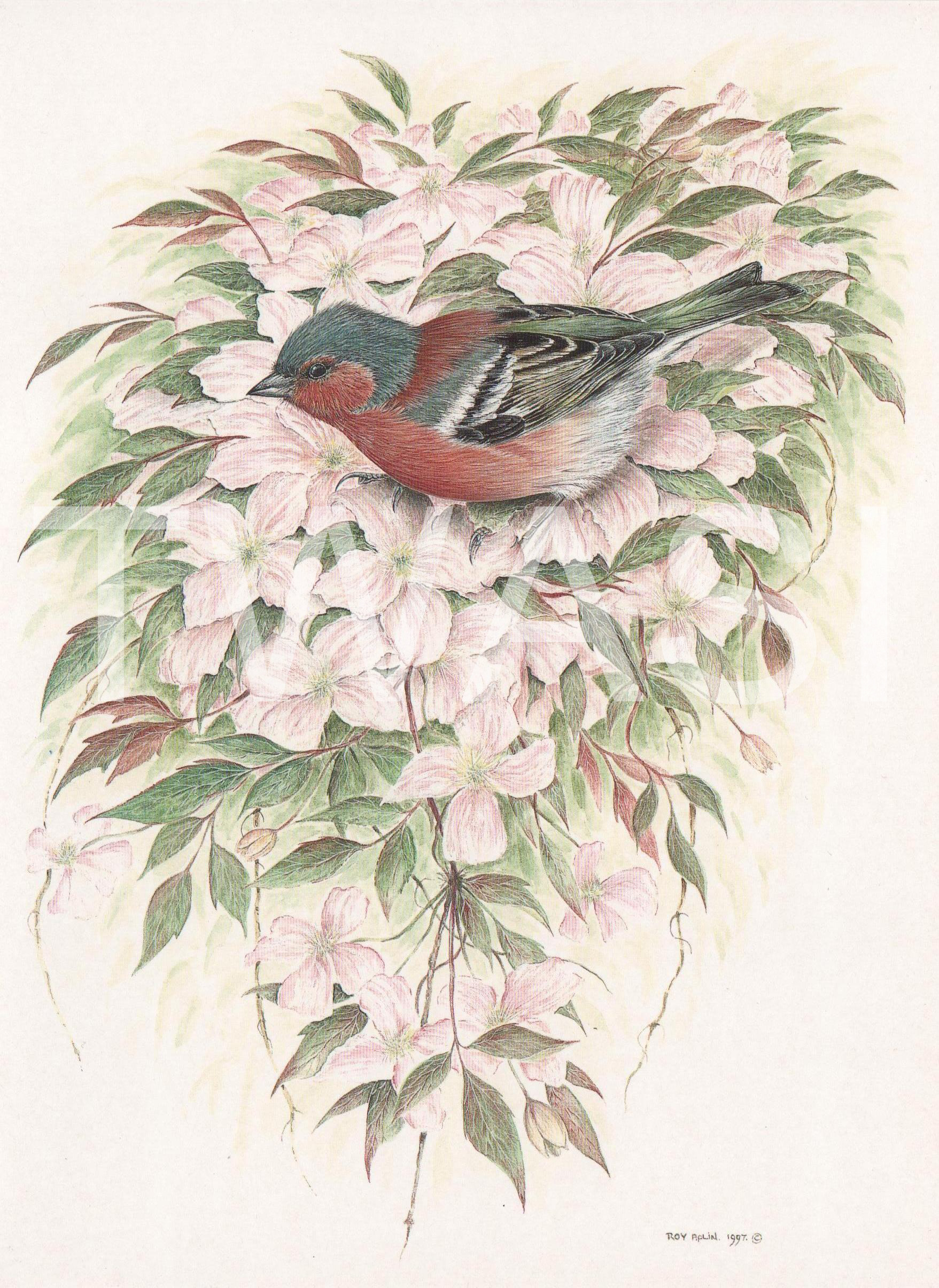 'Chaffinch on Clematis' by Roy Aplin Watercolour Gouache Framed 56 x 46 cms £475
