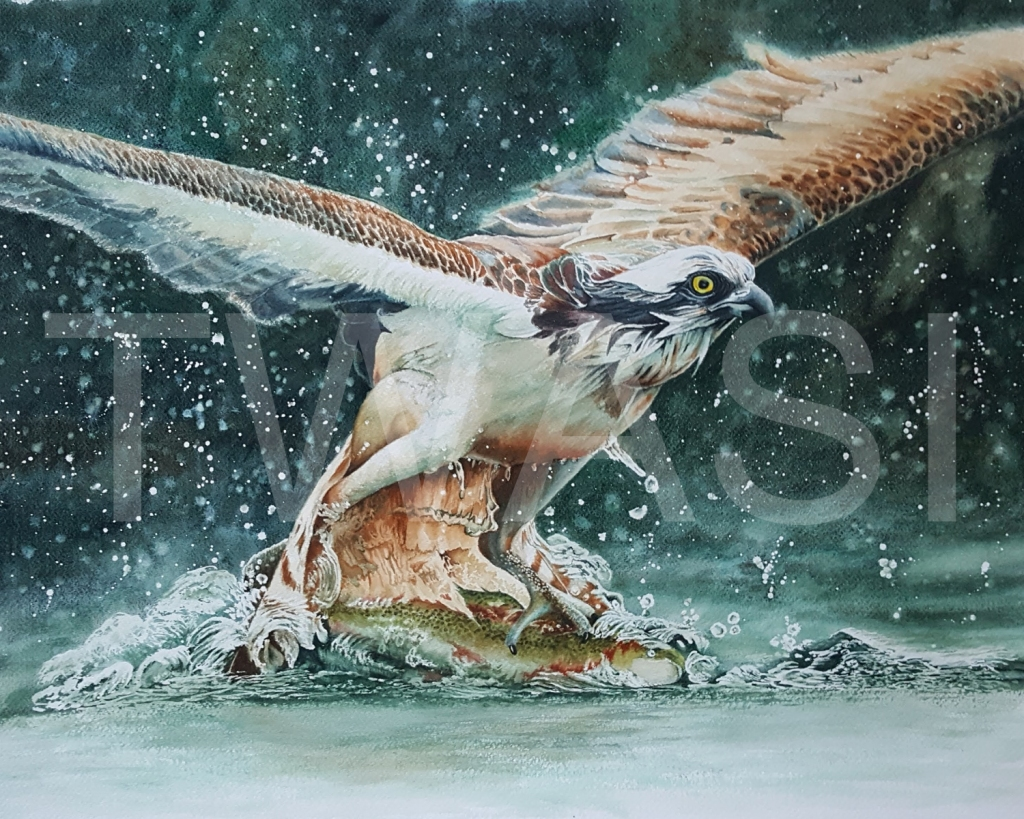 Catch of the Day by Caroline Strong. Came 3rd in the TWASI Members Summer Competition 2021